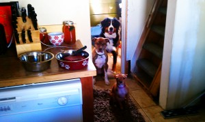 Rose, Nakia and their friend Lola waiting patiently for me to prepare breakfast.