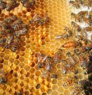 bee-keeping-11-1491032